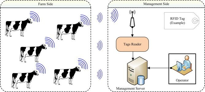 what is RFID animal tags used for